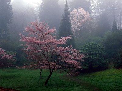 lindas árvores foto