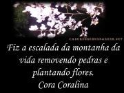 Na montanha da Vida Flores